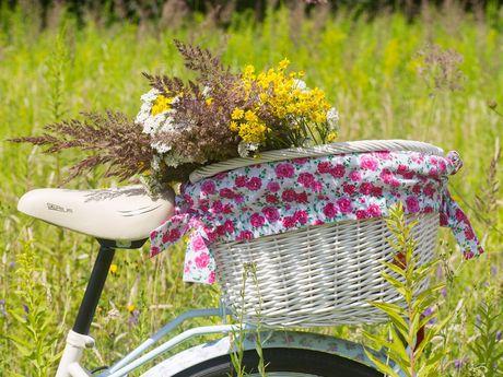 Radfahren in Wiesmoor & Umland