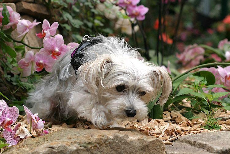 Hunde im Blumenreich