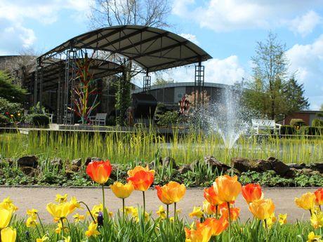 Blumenreich mit Frühlingsblühern
